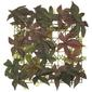 Vertical Garden Potato Ivy Brown & Green 24 x 24 cm