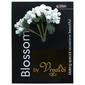 Vivaldi Blossoms 5 Head Foam Spray With Stamens White