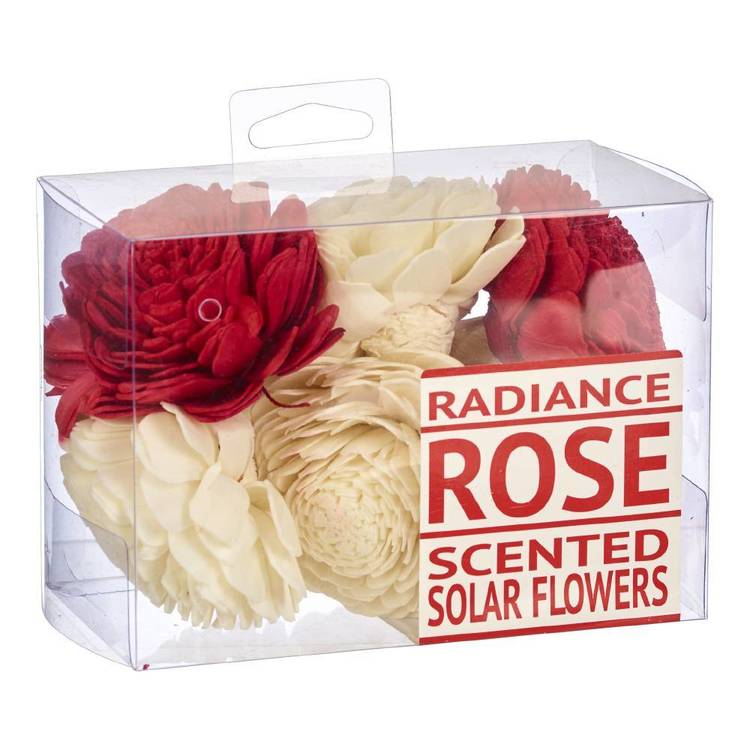 Radiance Boxed Sola Flowers