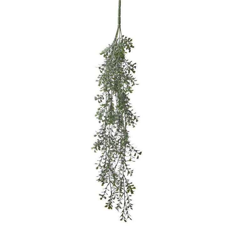 Boxwood Hanging Bush