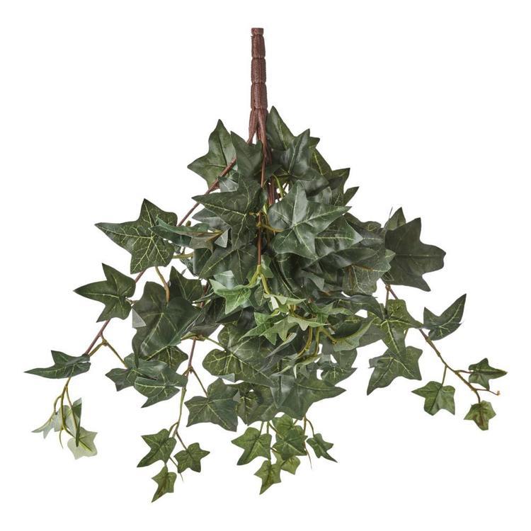 Med Sage Ivy Hanging Bush