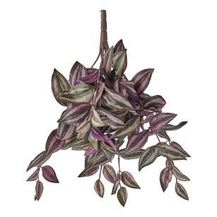 Wandering Jew Hanging Bush