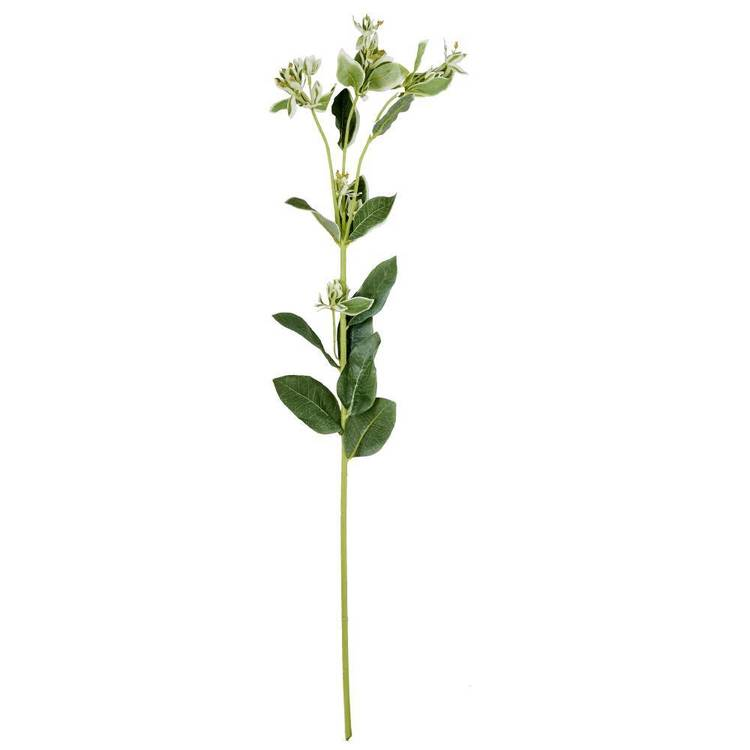 New Large Euphorbia Plant Spray