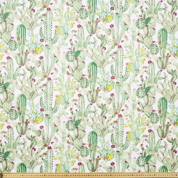 Cactus Montreaux Drill