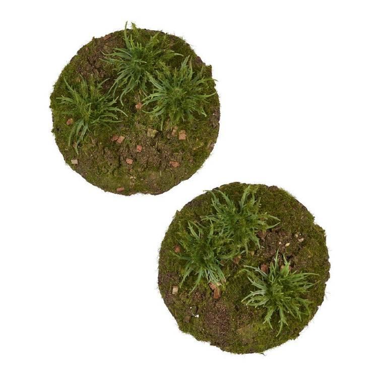 Moss Ball 2 Pack