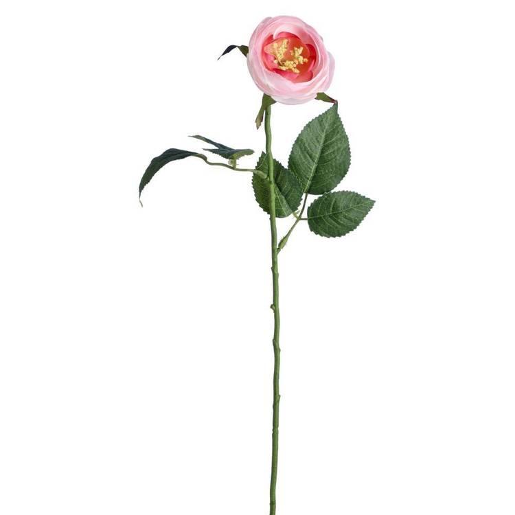 Ranunculus Stem 50 cm