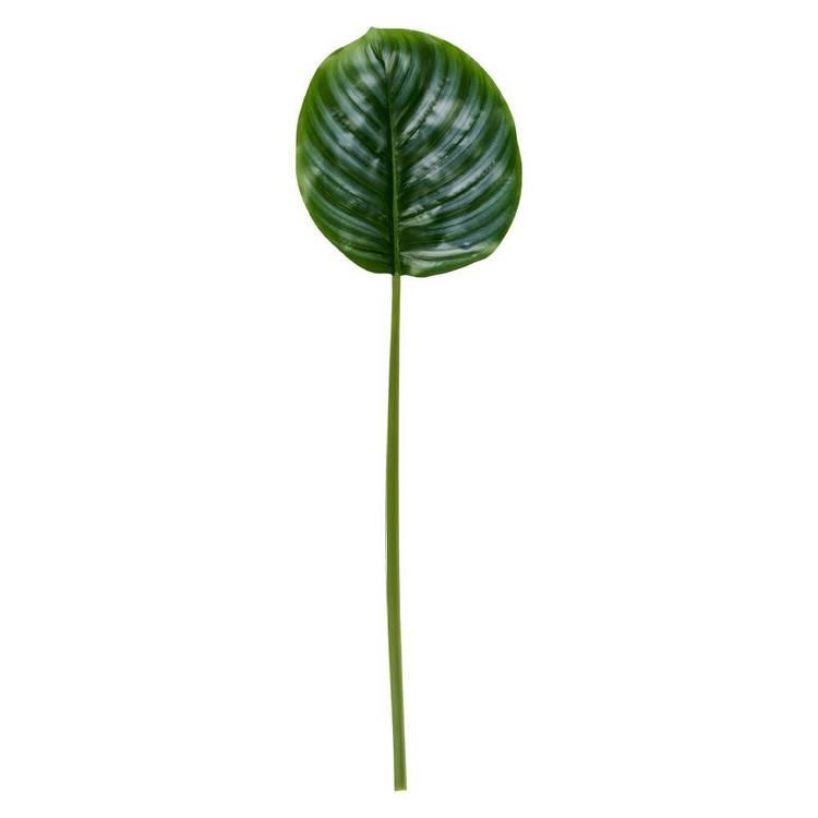 Calathea Leaf Pearl 60 cm