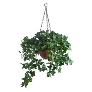 Botanica Ivy in Red Plastic Basket
