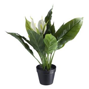 Botanica Artificial Peace Lily Potted Plant