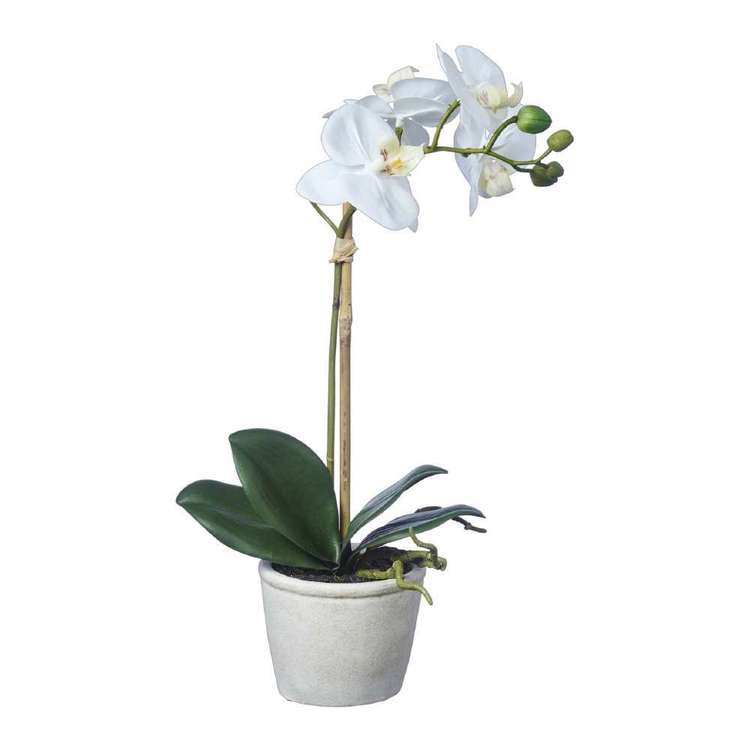 Emporium Real Touch Orchids With Pot White