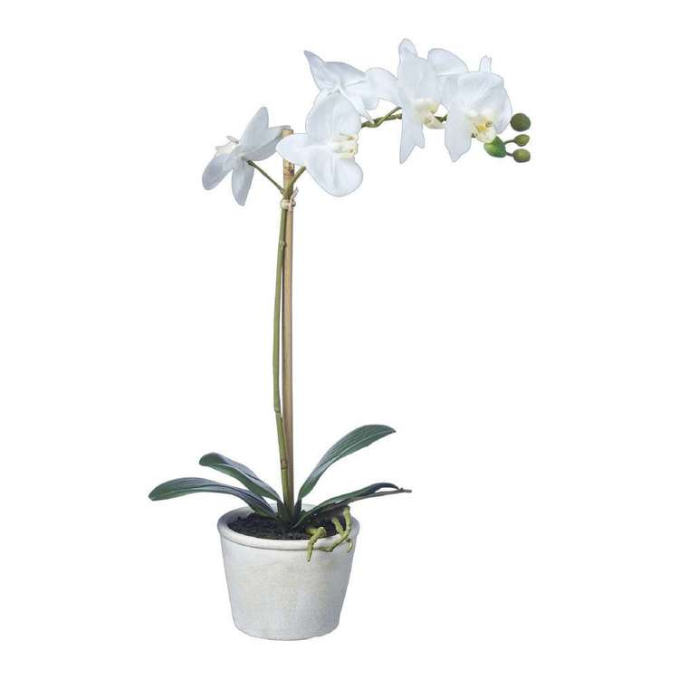 Emporium Real Touch Orchids With Pot