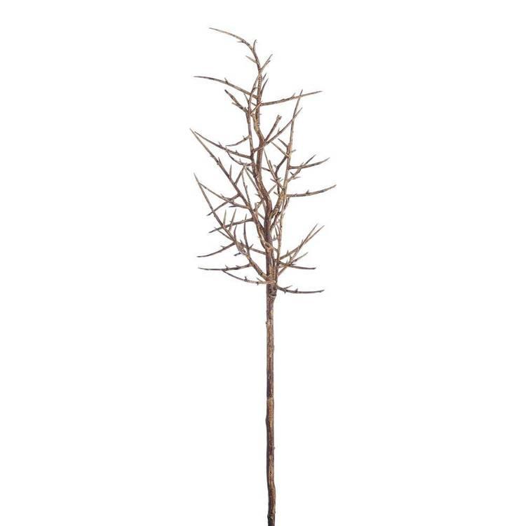 Thorns Branch