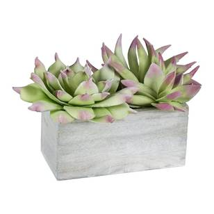 Ombre Home Pastel Abstract Cacti in Pot