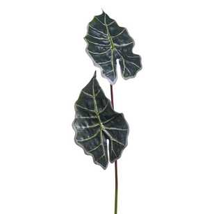 Green Stems Alocasia Leaf With Coat