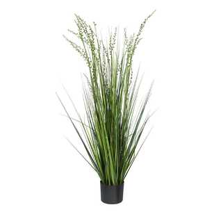 Botanica Onion Grass