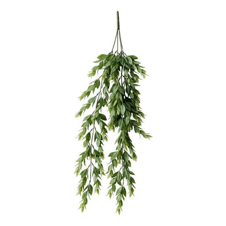 Ruscus Hanging Bush
