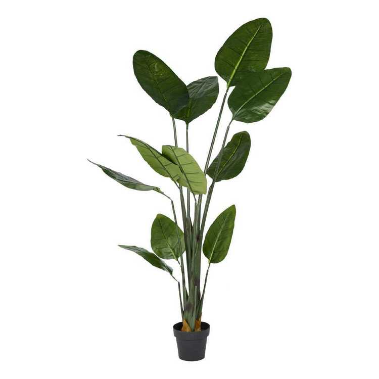 Botanica Jumbo Banana Plant