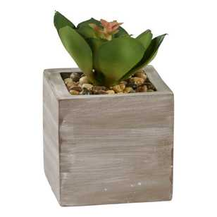 Ombre Home Tropical Soul Sino Succulent