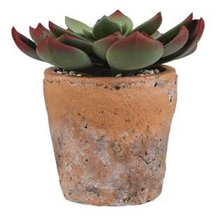 Bouclair Botanica Sepervivum Terra Pot