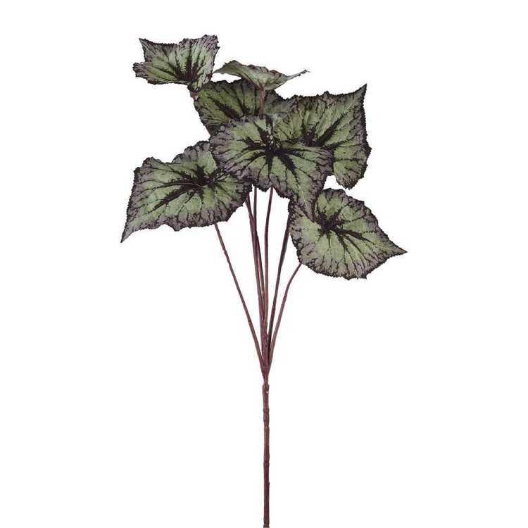 Begonia Leaves Spray