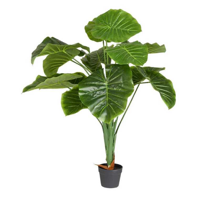 Botanica Exotic Greenhouse Taro Planter