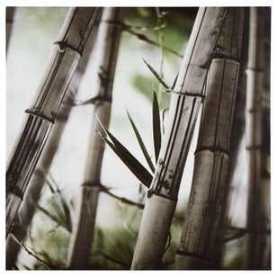 Bouclair Green Shelter Bamboo Forest Canvas