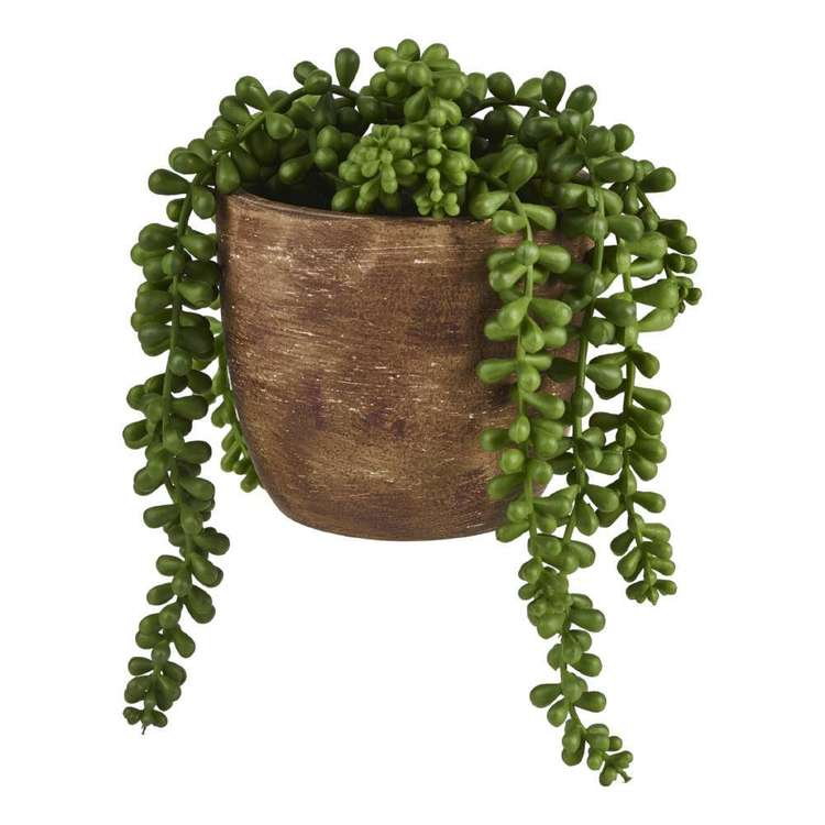 Living Space Succulent Beands In Pot