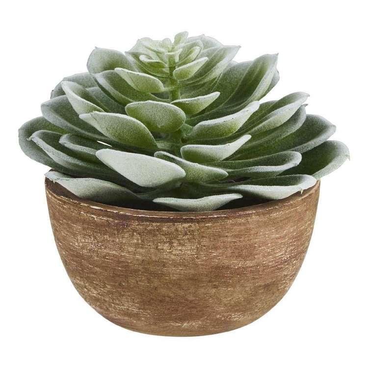 Living Space Echeveria Succulent Pot