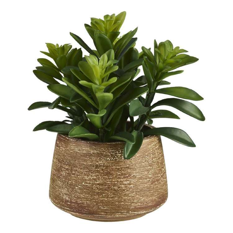 Living Space Larual Pot