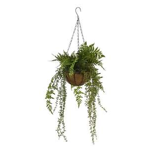 Living Space Hanging Fern Bowl