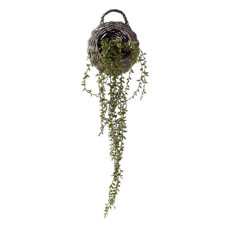 Living Space Plant In Hanging Basket Green 55 cm