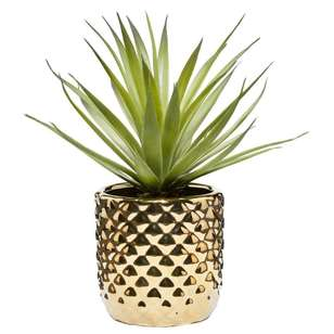 Bouclair Travellers Retreat Sword Grass Plant