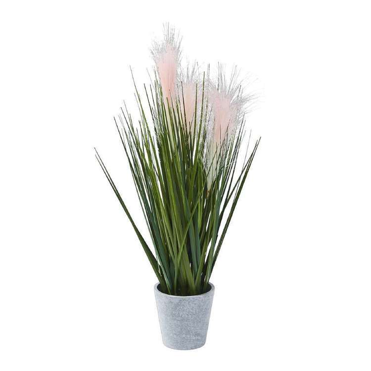 Botanica Foxtail With Grass In a Pot