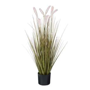 Botanica Pampas With Grass In a Pot