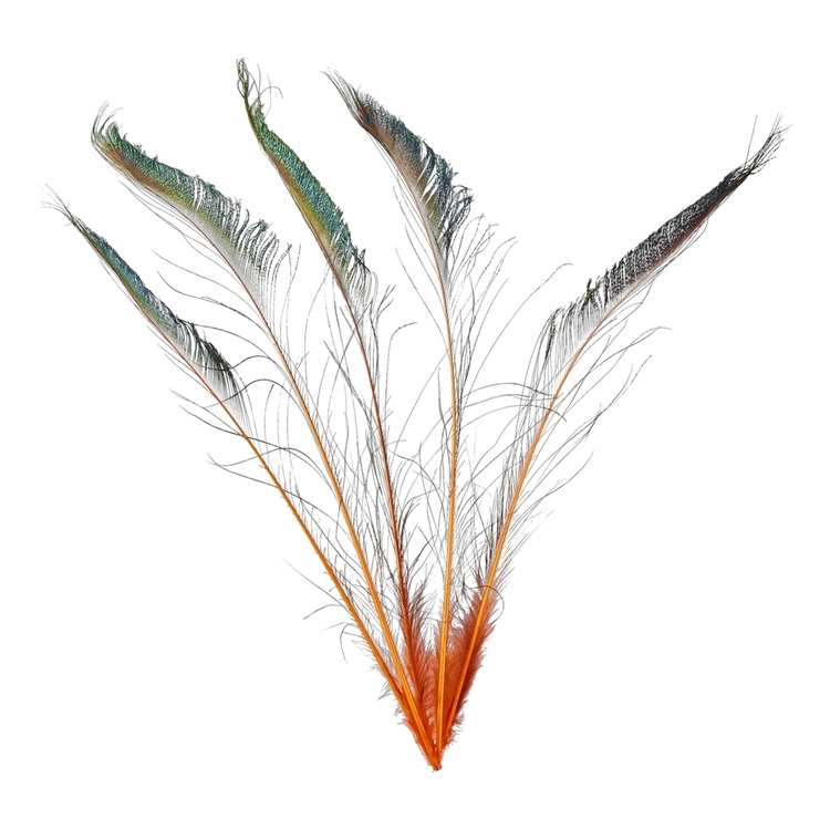 Maria George Large Spine Feather 5 Pack
