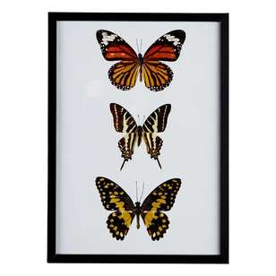 Cooper & Co Butterflys A3 Framed Print #9
