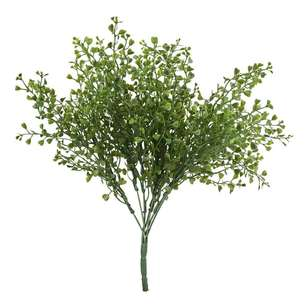 Reliance UV Protected Boxwood Bush