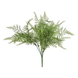 Reliance UV Protected Lace Fern Bush