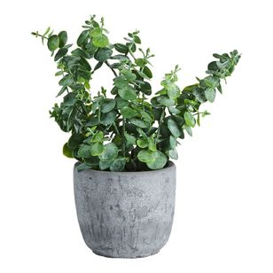 Living Space Penny Leaf In Cement Pot