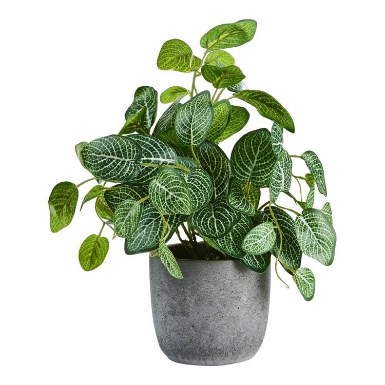 Living Space Mint Leaf In Cement Pot