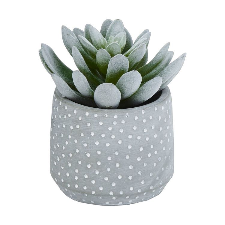 Ombre Home Weathered Coastal Succulent #1