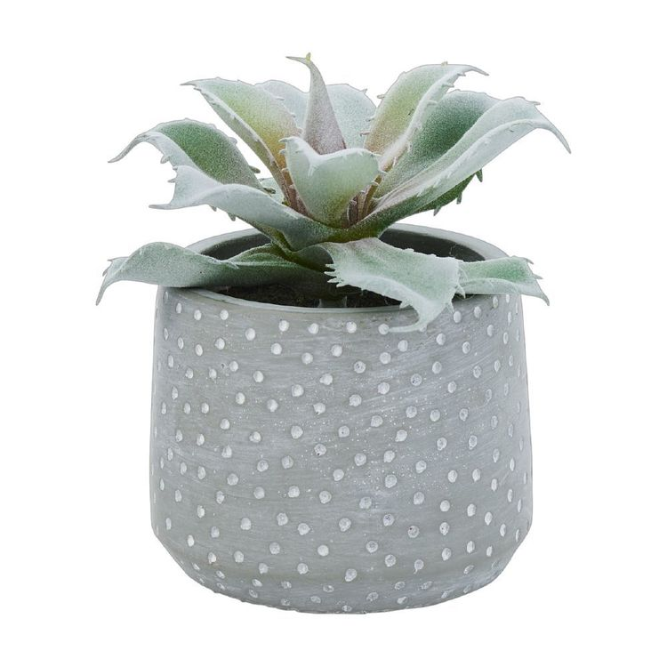 Ombre Home Weathered Coastal Succulent #2