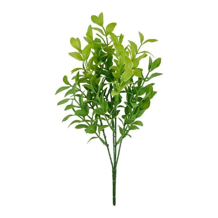 Soft Finish Boxwood Bush