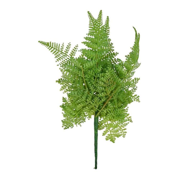 Soft Finish Fern Bush