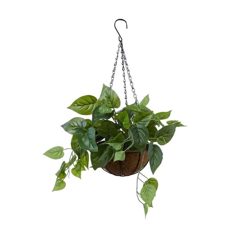 Living Space Hanging Ivy Plant With Palm Bowl