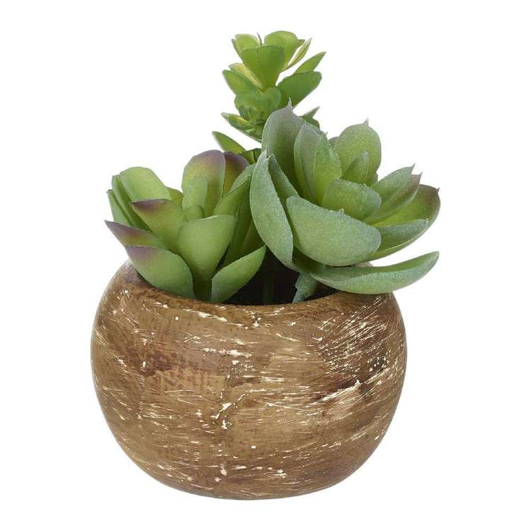 Living Space Mini Succulents In Palm Bowl #2