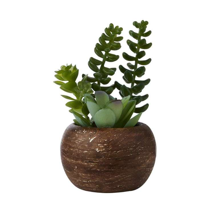 Living Space Mini Succulents In Palm Bowl #3 Green 5 x 12 cm