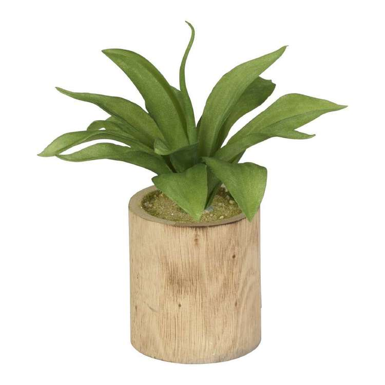 Living Space Flocking Agave Wood Pot