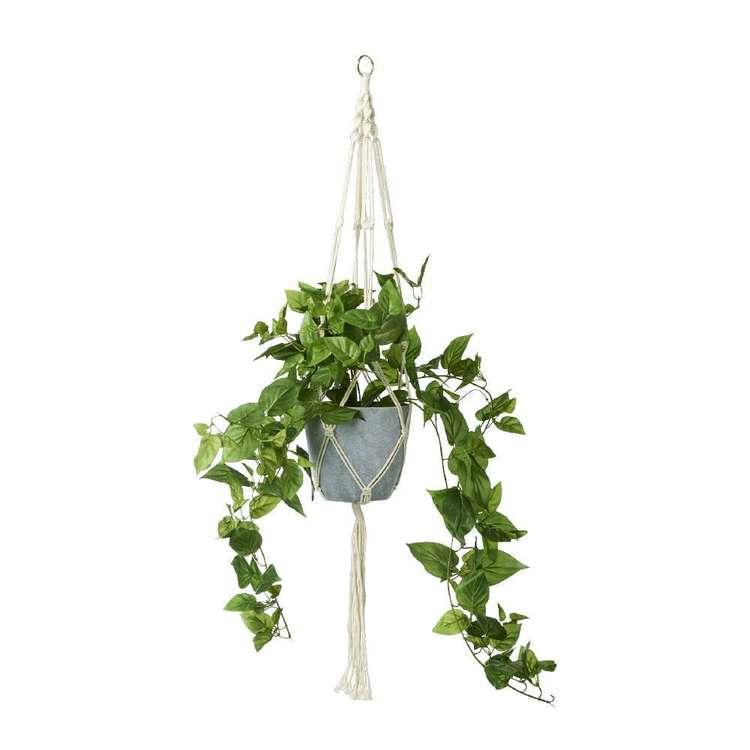 Botanica Hanging Ivy