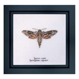 Thea Gouverneur Sphinx Moth Cross Stitch Kit